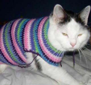 Sweaters for Cats: Funny or Ridiculous?