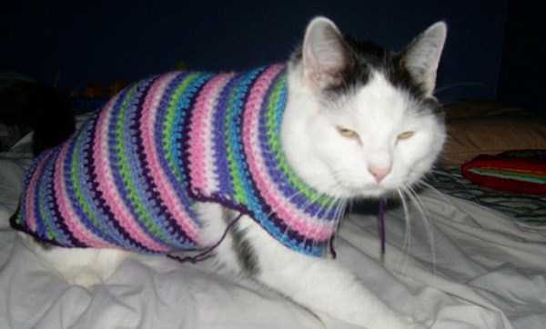 Sweaters for Cats: Funny or Ridiculous? 23