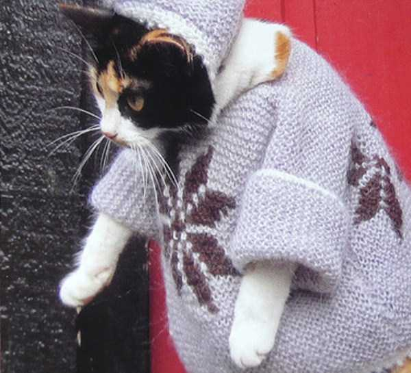 cats-in-sweaters (24)