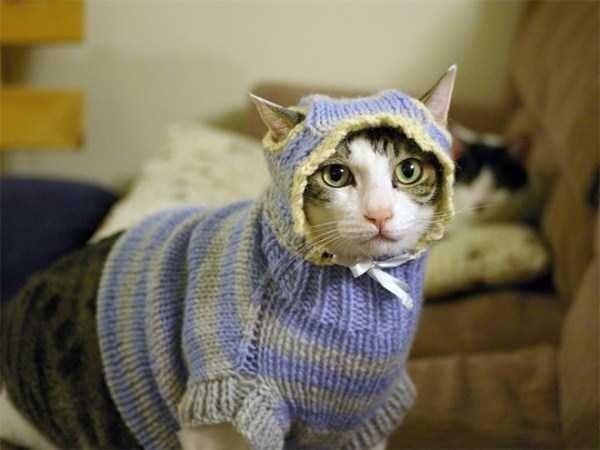 cats-in-sweaters (3)