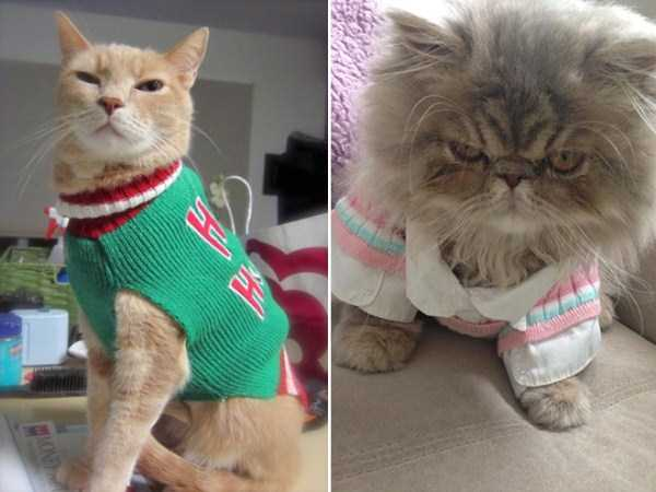 cats-in-sweaters (4)