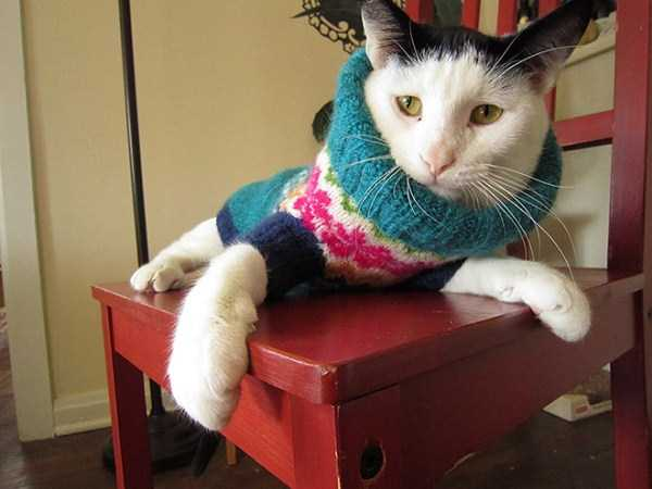 cats-in-sweaters (5)