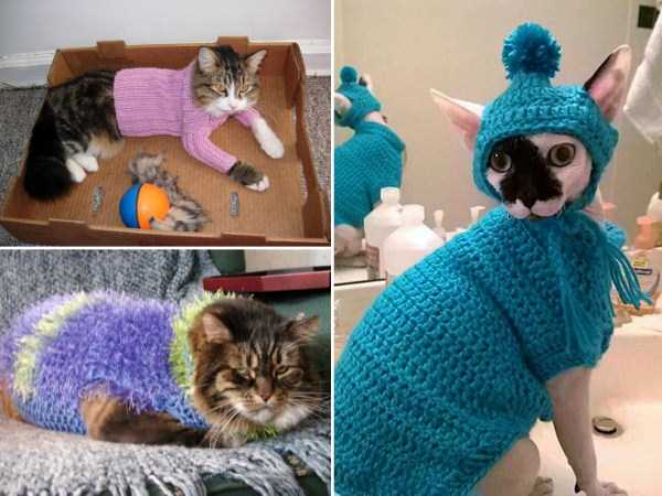cats-in-sweaters (6)