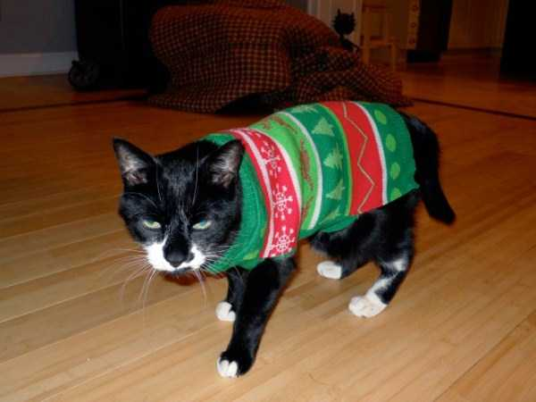 cats-in-sweaters (7)