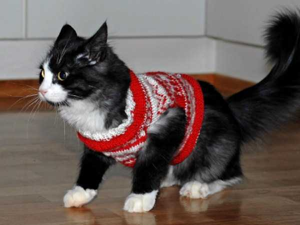 cats-in-sweaters (9)