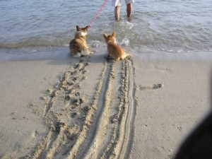 Dogs Who Are Afraid Of Water (17 photos) 10