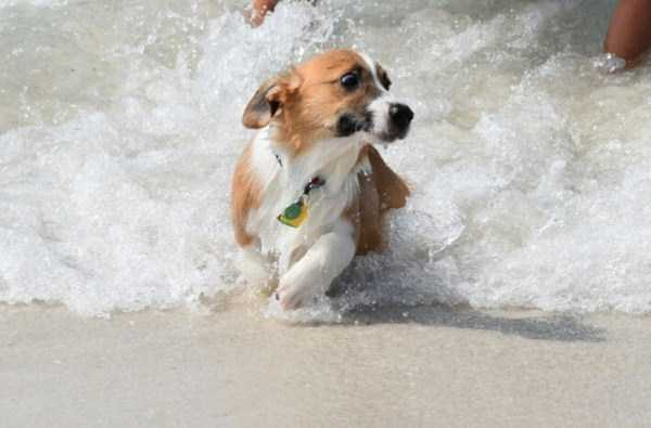 dogs-who-hate-water (11)