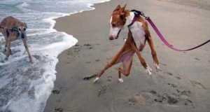 Dogs Who Are Afraid Of Water (17 photos) 12
