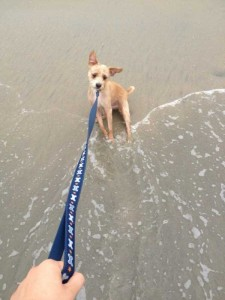 Dogs Who Are Afraid Of Water (17 photos) 13