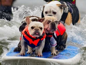 Dogs Who Are Afraid Of Water (17 photos) 14