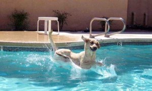 Dogs Who Are Afraid Of Water (17 photos) 15