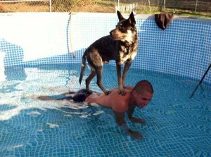 Dogs Who Are Afraid Of Water (17 photos) 2