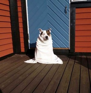 Dogs Who Are Afraid Of Water (17 photos) 7