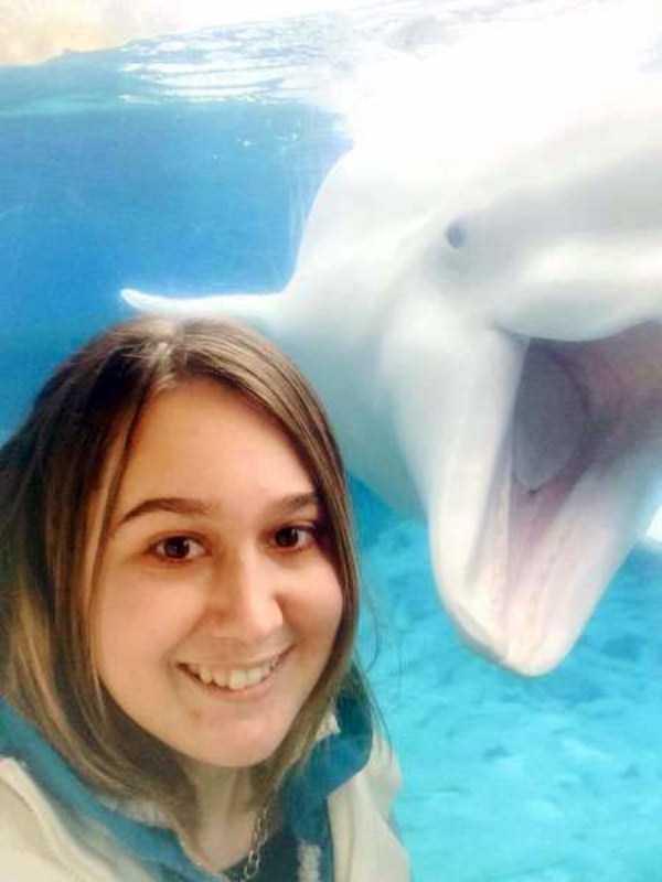 funny-aquarium-pictures (10)