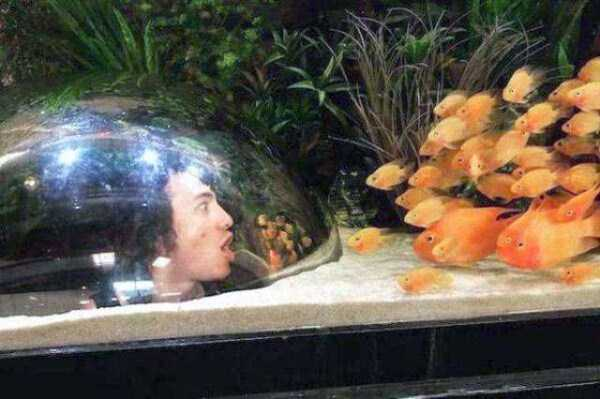 Aquariums Are So Fun (24 photos) 14