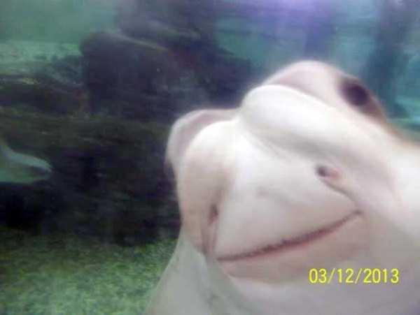 funny-aquarium-pictures (15)