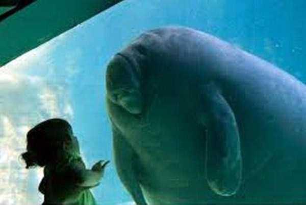 funny-aquarium-pictures (2)