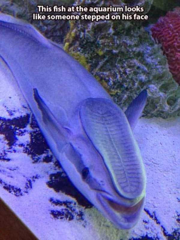 funny-aquarium-pictures (20)