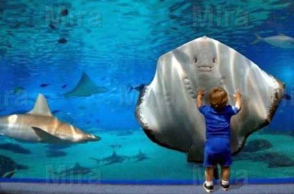 funny-aquarium-pictures (22)