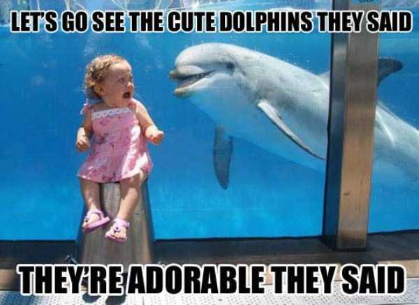 funny-aquarium-pictures (23)