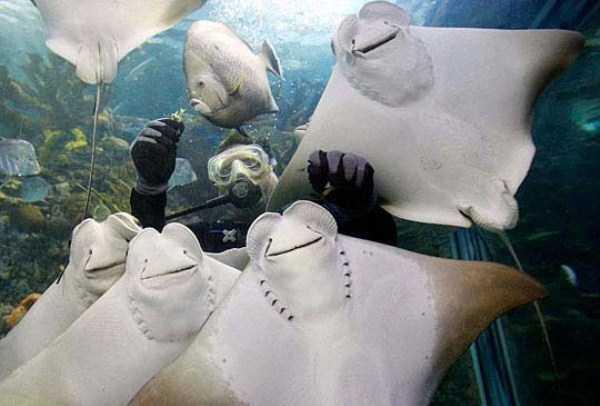 funny-aquarium-pictures (24)