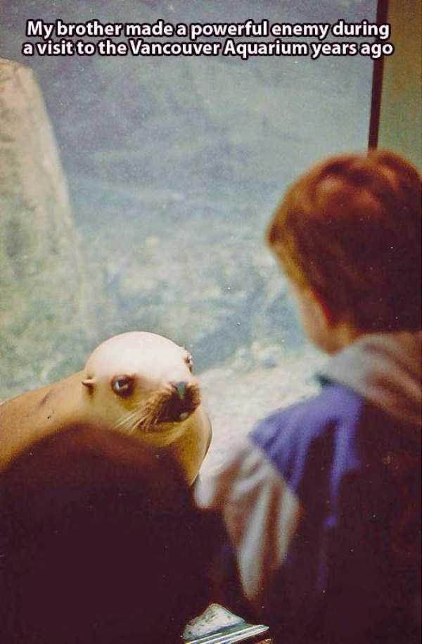 funny-aquarium-pictures (4)
