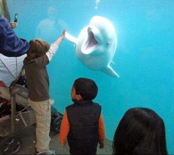 funny-aquarium-pictures (7)