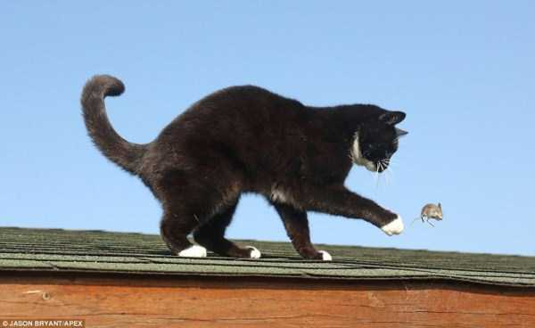 Say Hello to the Real Life Tom & Jerry (7 photos) 6