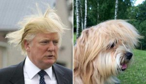 Donald Trump Look-Alikes (20 photos) 18