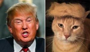 Donald Trump Look-Alikes (20 photos) 2
