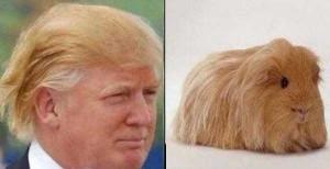 Donald Trump Look-Alikes (20 photos) 20