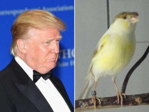 Donald Trump Look-Alikes (20 photos) 4