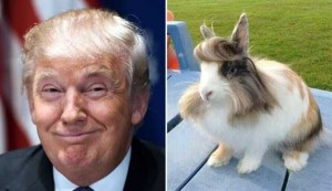 Donald Trump Look-Alikes (20 photos) 5