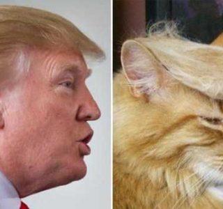 Donald Trump Look-Alikes (20 photos)