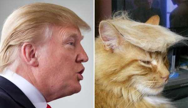 Donald Trump Look-Alikes (20 photos) 6