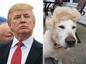 Donald Trump Look-Alikes (20 photos) 8
