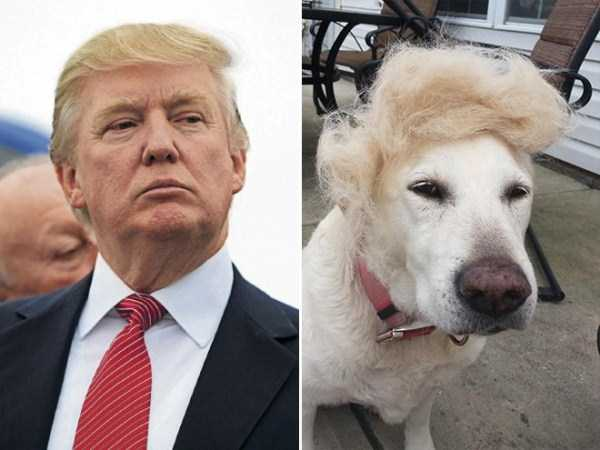 things-that-look-like-donald-trump (8)