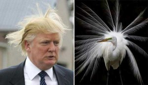 Donald Trump Look-Alikes (20 photos) 9