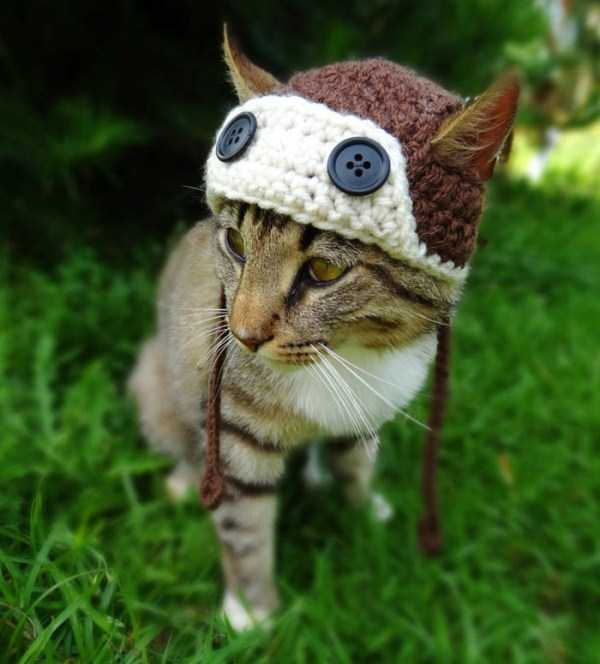 crocheted-pet-hats (1)