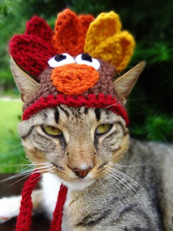 crocheted-pet-hats (10)