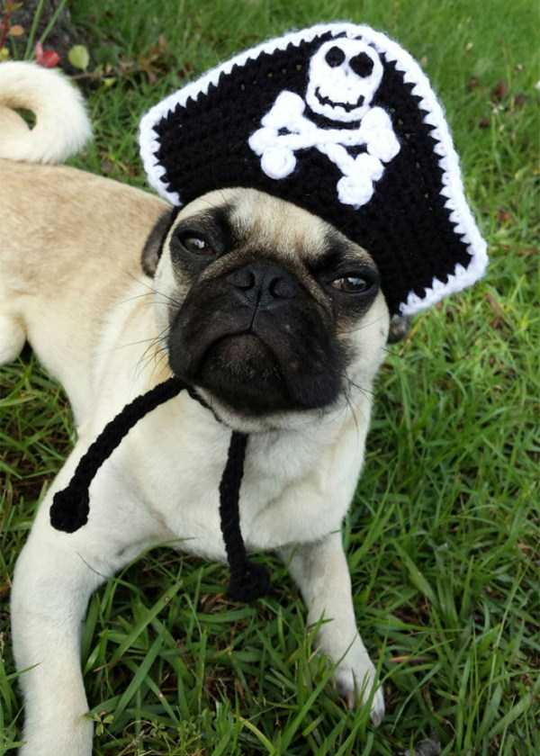 crocheted-pet-hats (13)