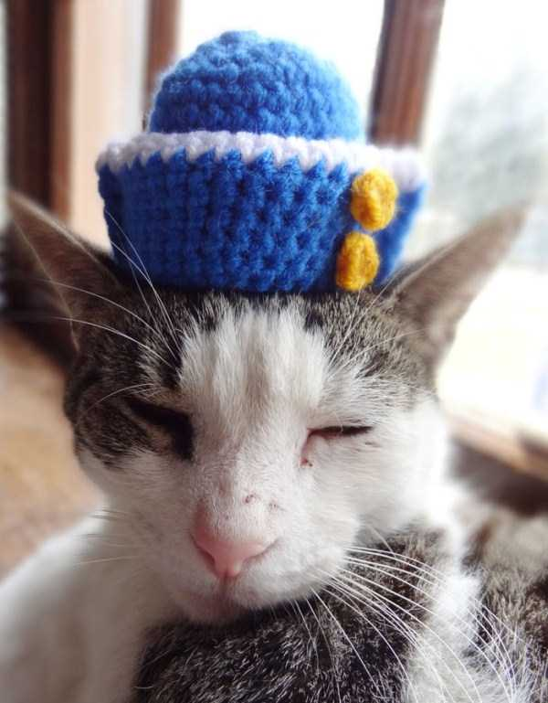 crocheted-pet-hats (14)