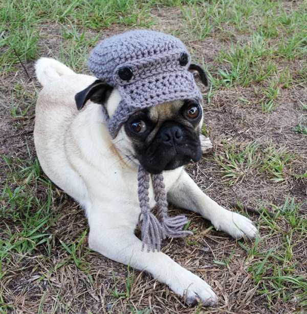 crocheted-pet-hats (17)