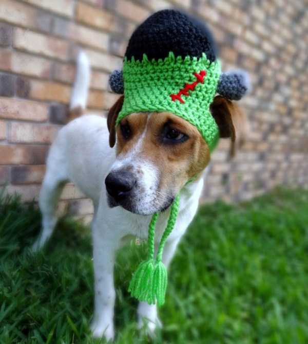 crocheted-pet-hats (18)