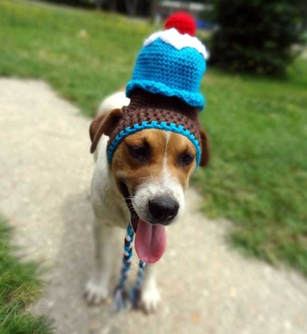 crocheted-pet-hats (19)