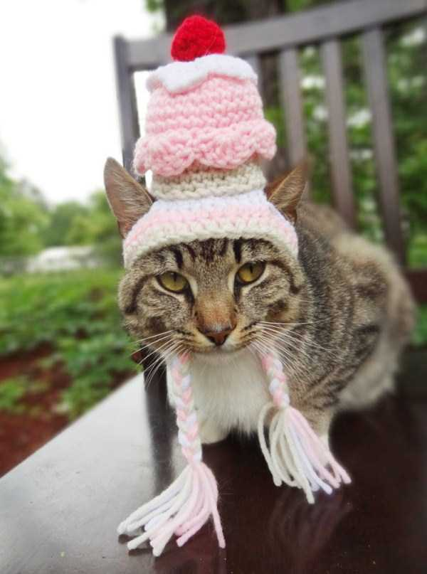 crocheted-pet-hats (20)
