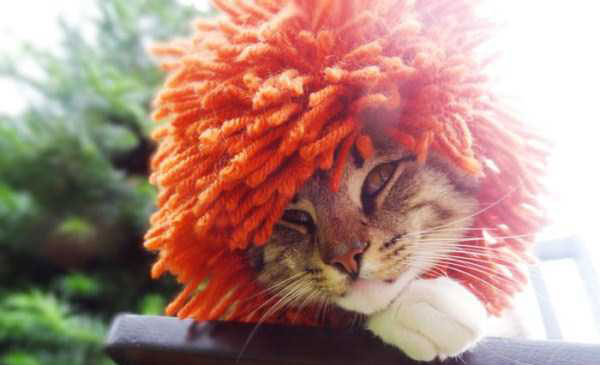 crocheted-pet-hats-(21)