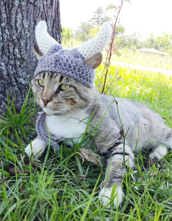 crocheted-pet-hats (3)