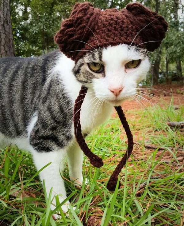 crocheted-pet-hats (5)