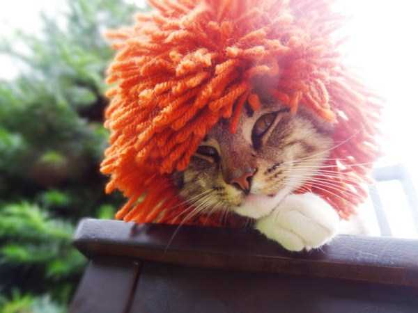 crocheted-pet-hats (6)